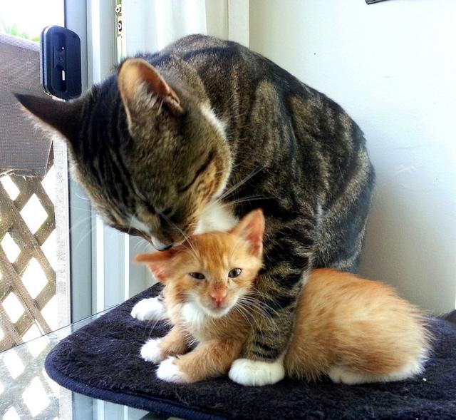 Jennifer C_ kittens kissing.jpg