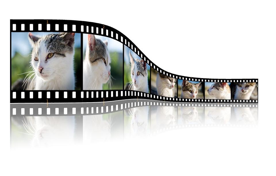 cat on film strip.jpg
