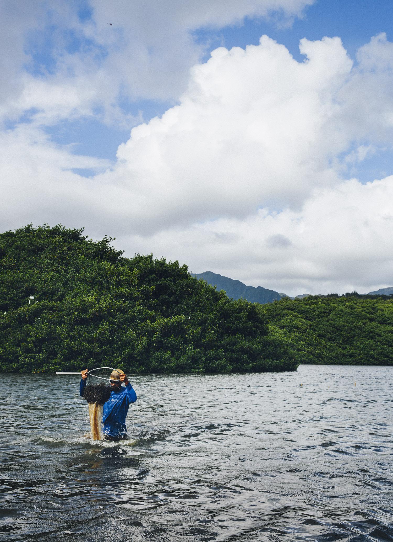 hawaii-7775_final.jpg