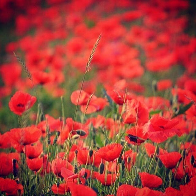 Lest we forget. . . . Deeply grateful for the opportunities afforded us by those who came before to create and defend them. . . . #rememberanceday #honouring #gratitude #canada #pride #remembering #givingthanks