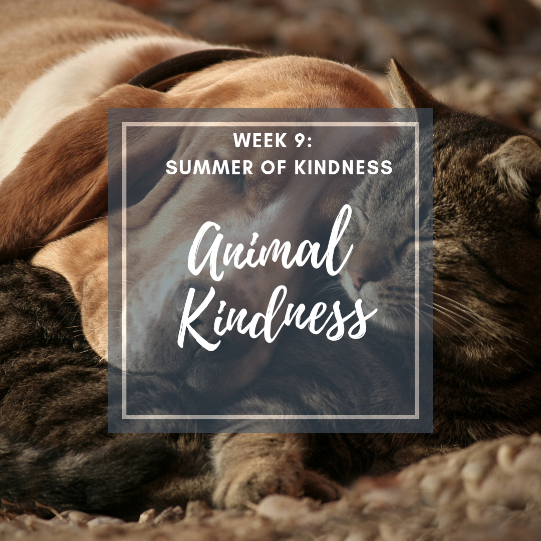 Summer Activity for kids showing kindness to animals