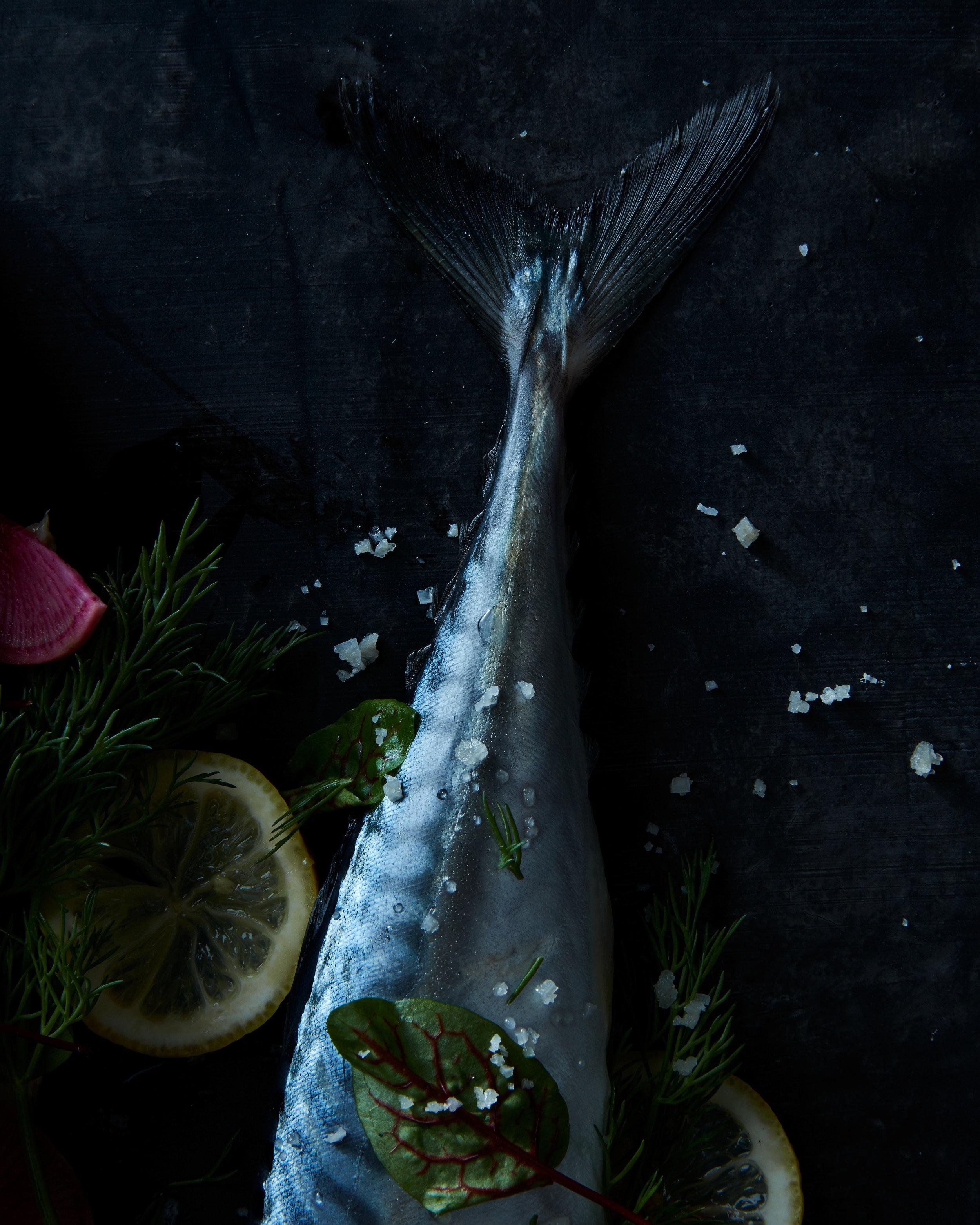 bluefish-tail.jpg