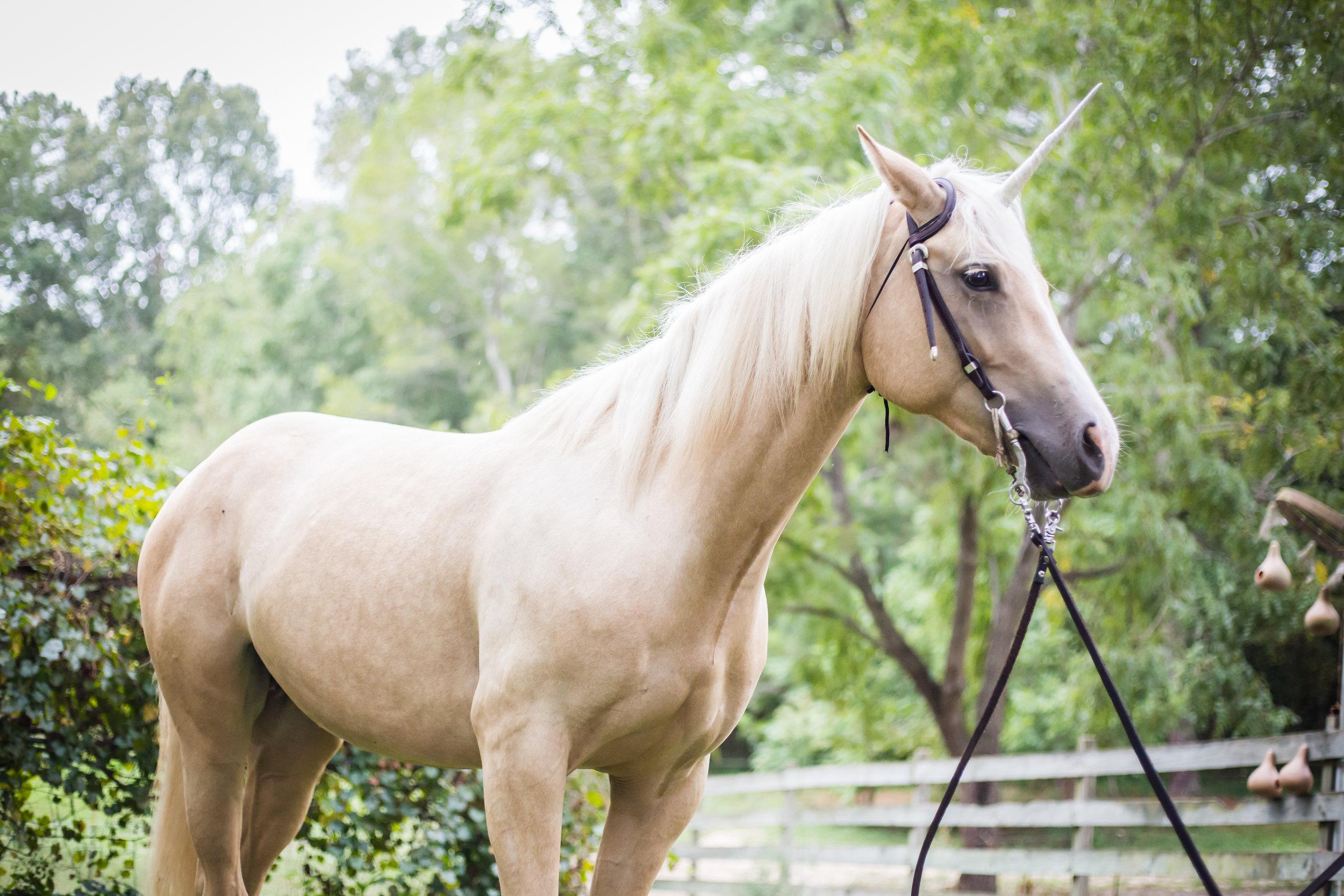 Kaplar Horse-0267.jpg