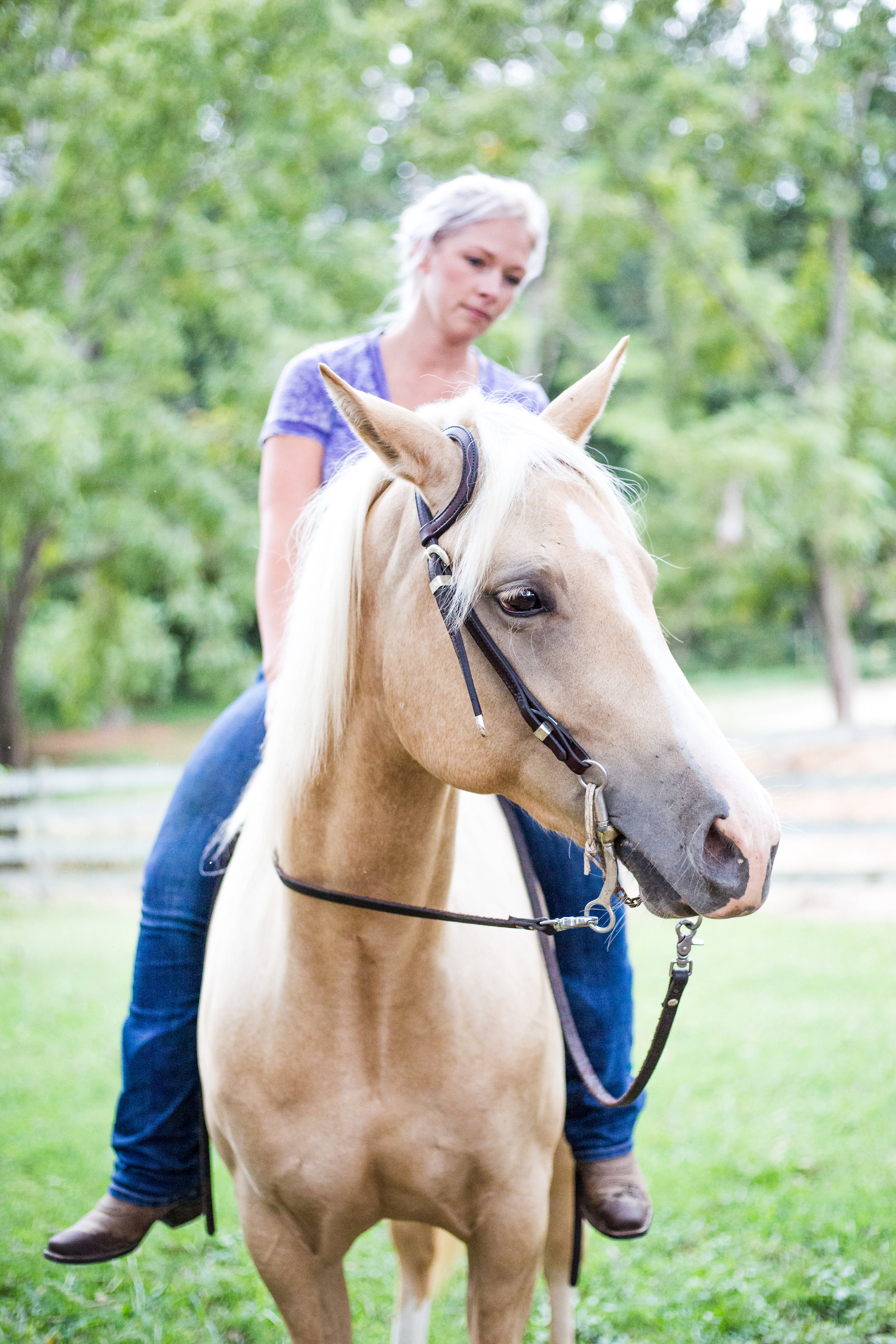 Kaplar Horse-0400.jpg