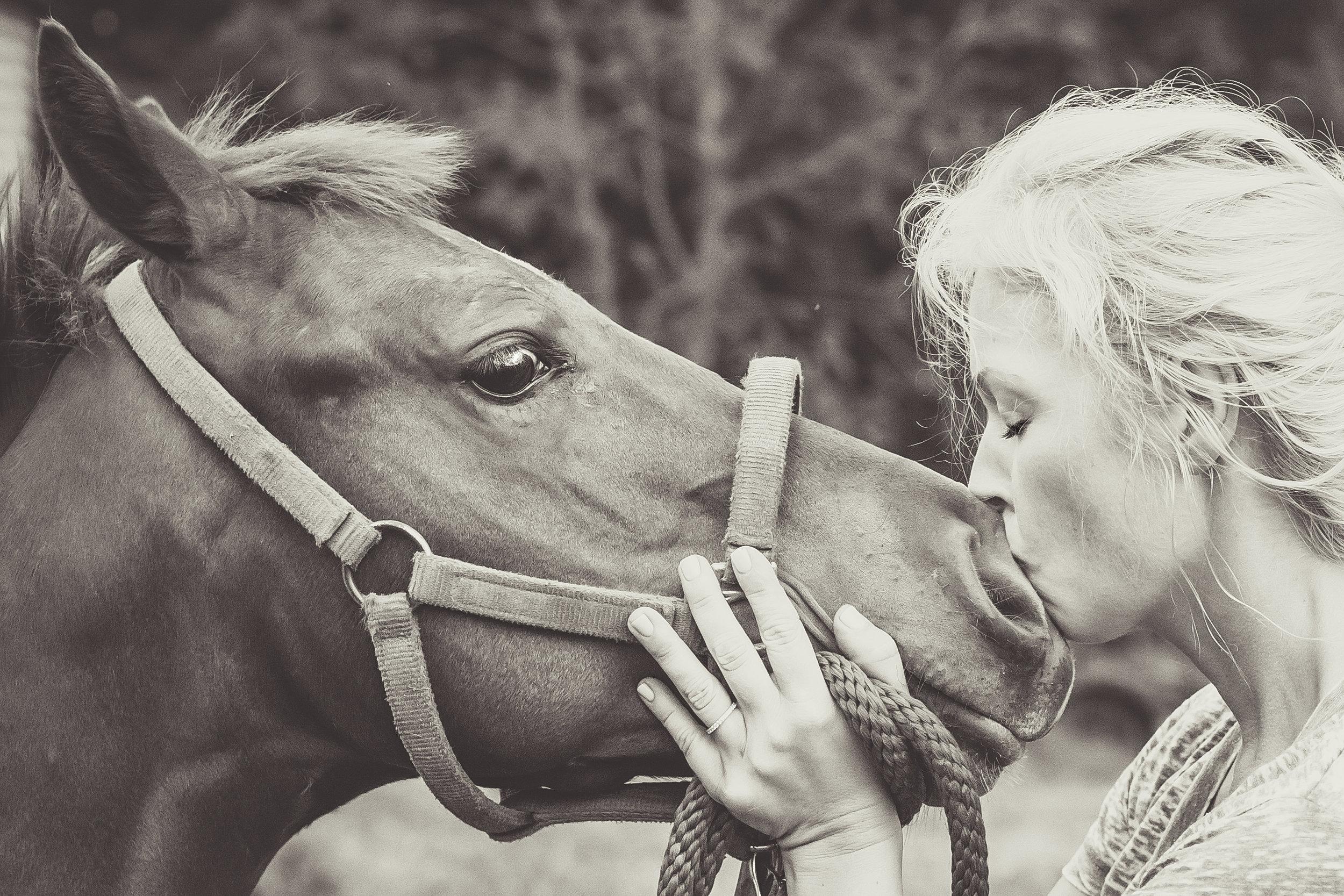Kaplar Horse-0456-2.jpg