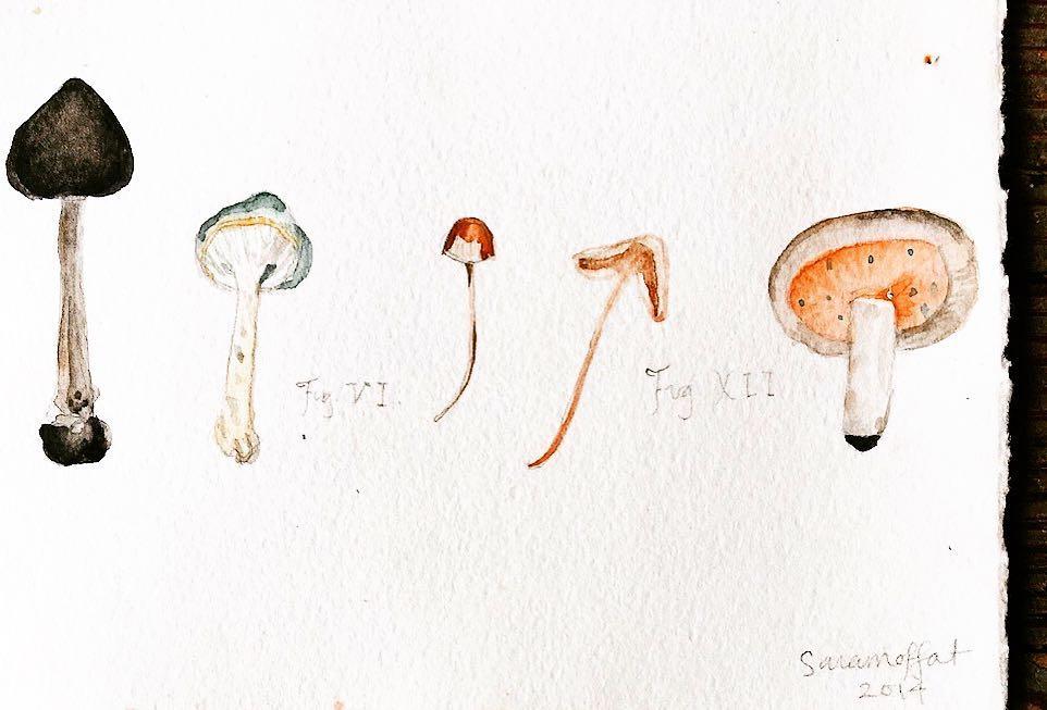 Artwork by  Sara Moffat