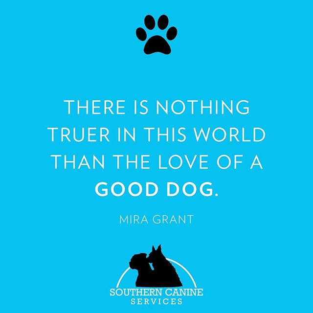 #southerncanine #puppylove #tuesdaythoughts #dogtrainer #dogtrainersofinstagram