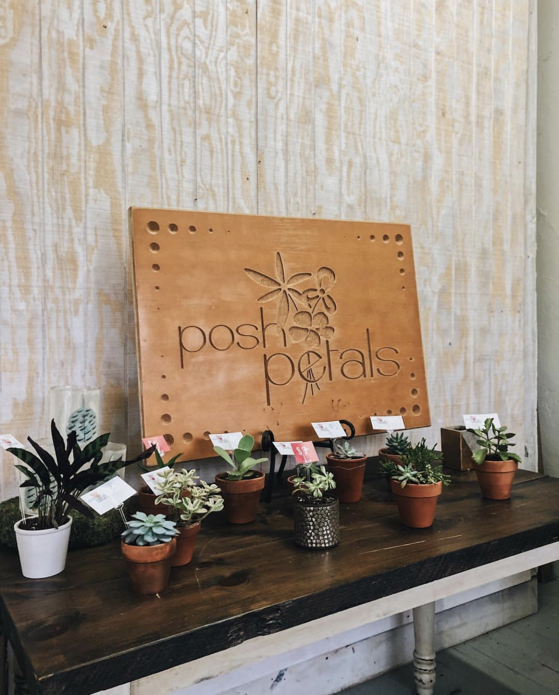 posh petals grand rapids plants shop succulent