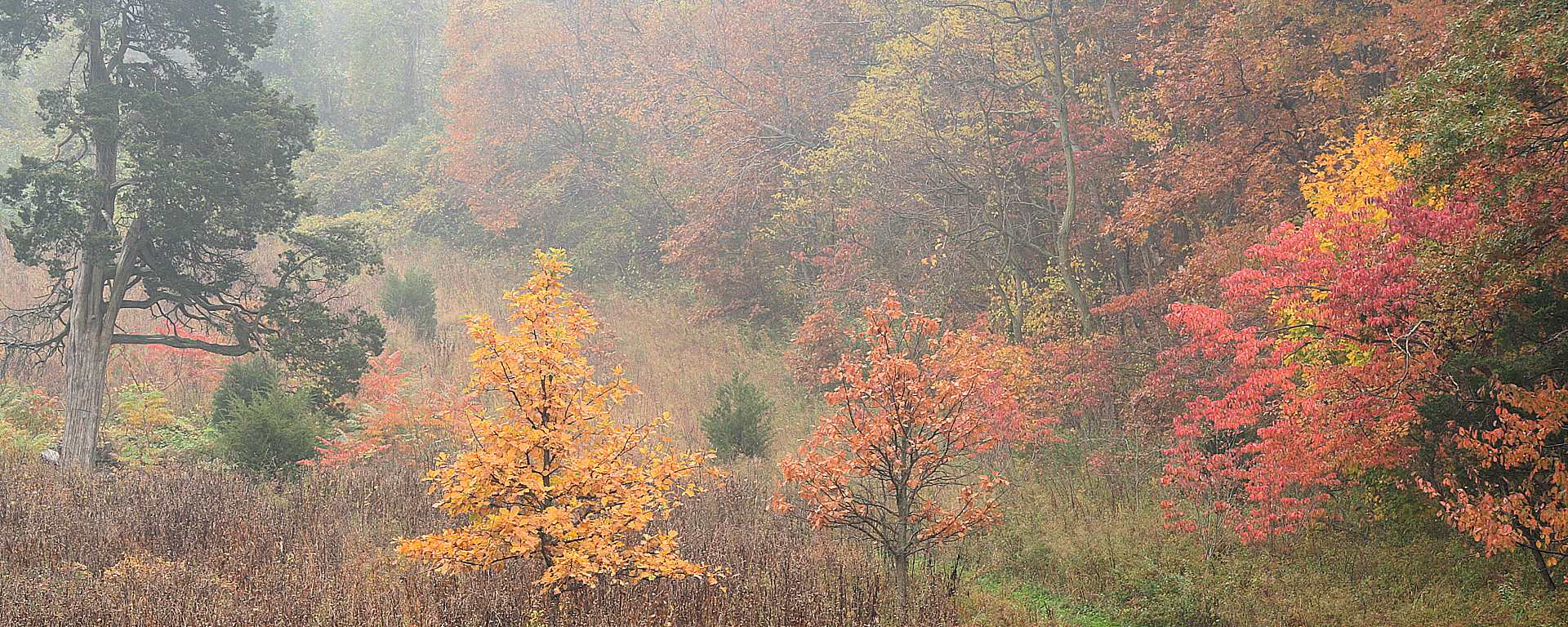 Avalon Preserve in Autumn Fog, 2005