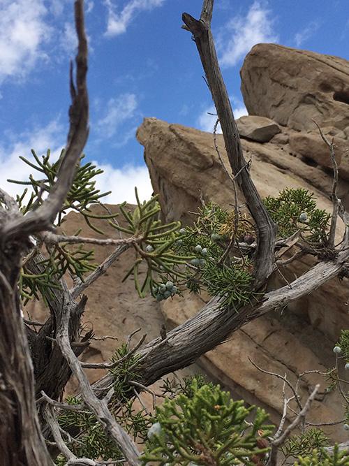 Vasquez Rocks Natural Area Park ,Agua Dulce, California