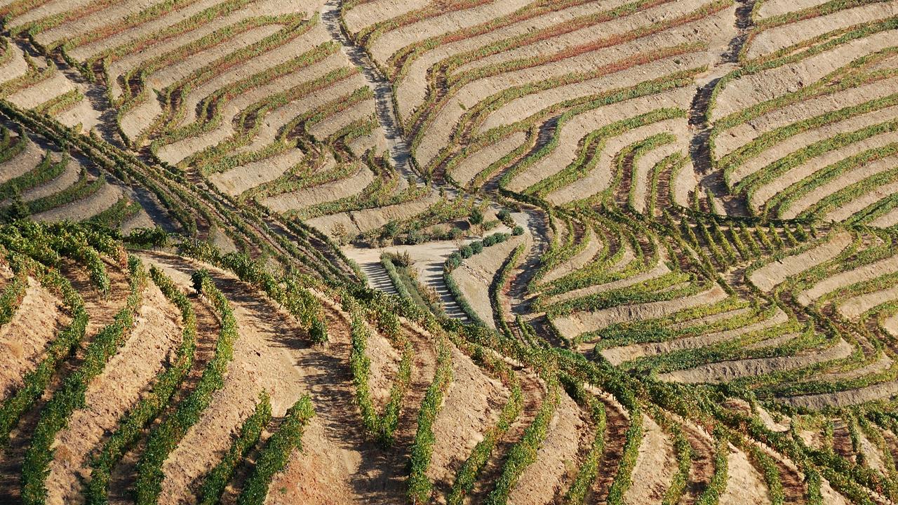 30 Wine Regions To Explore Around the World