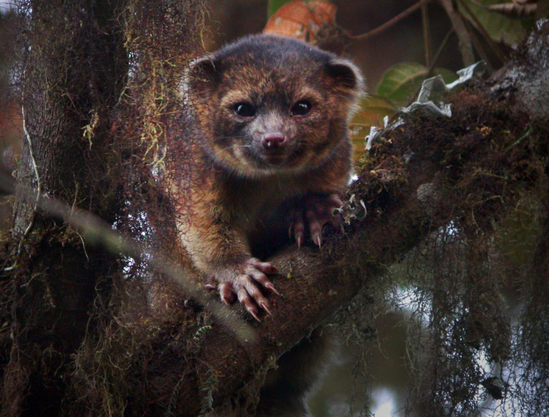 11 New Animal Discoveries of 2012