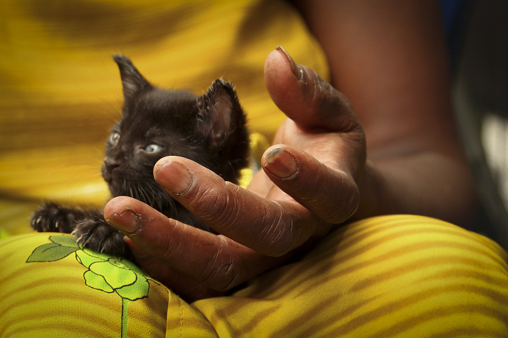 Aug. 22, 2012: A view of Patricia's hand. She holds adoption events for the kittens she rescues in Union Square.