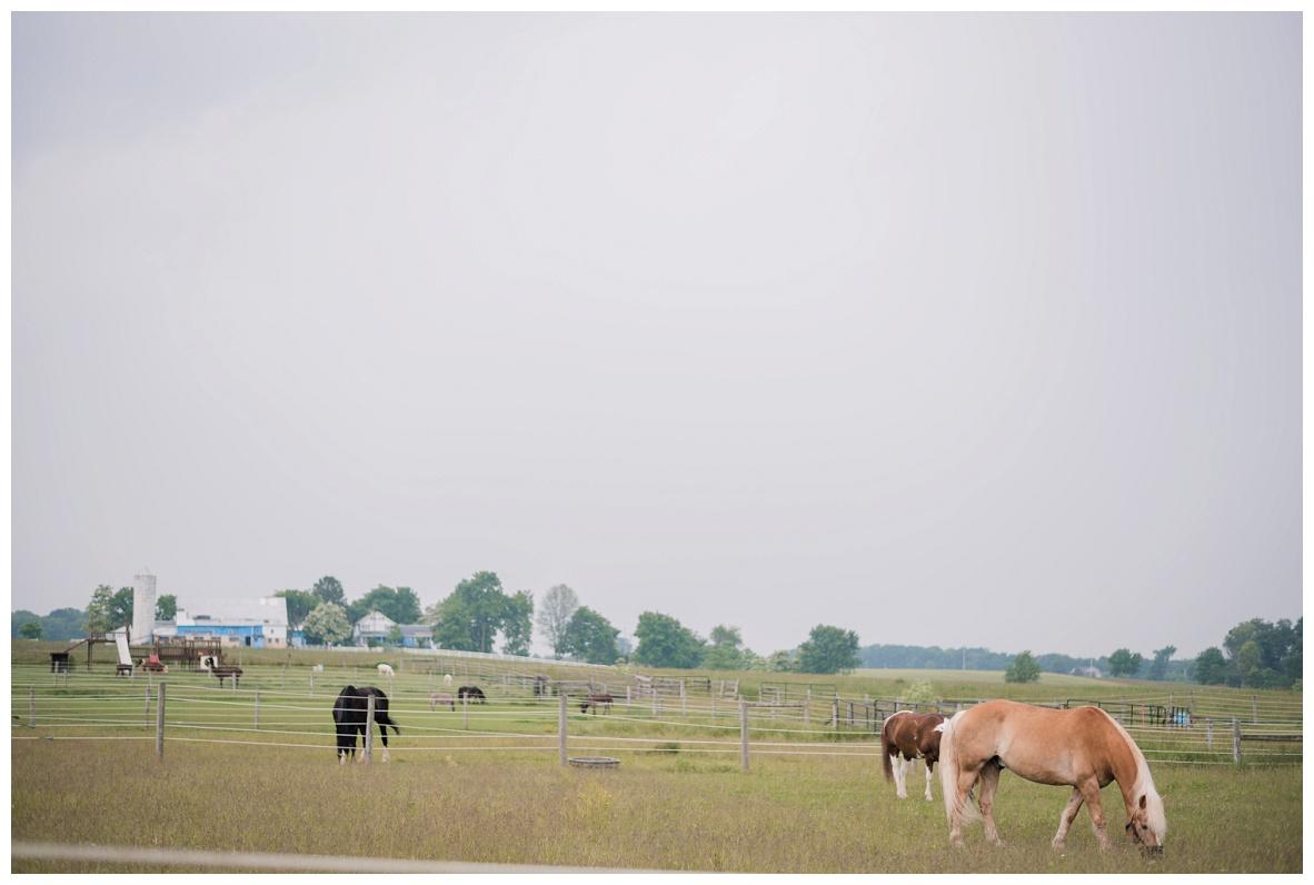Nickajack Farm Wedding_0001.jpg