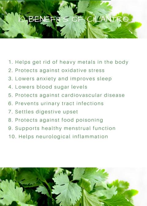 10 Benefits of Cilantro