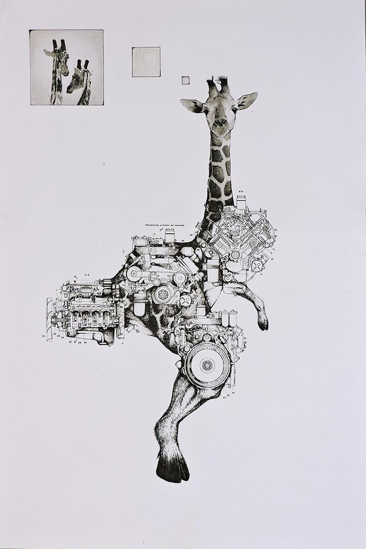 GiraForte.jpg