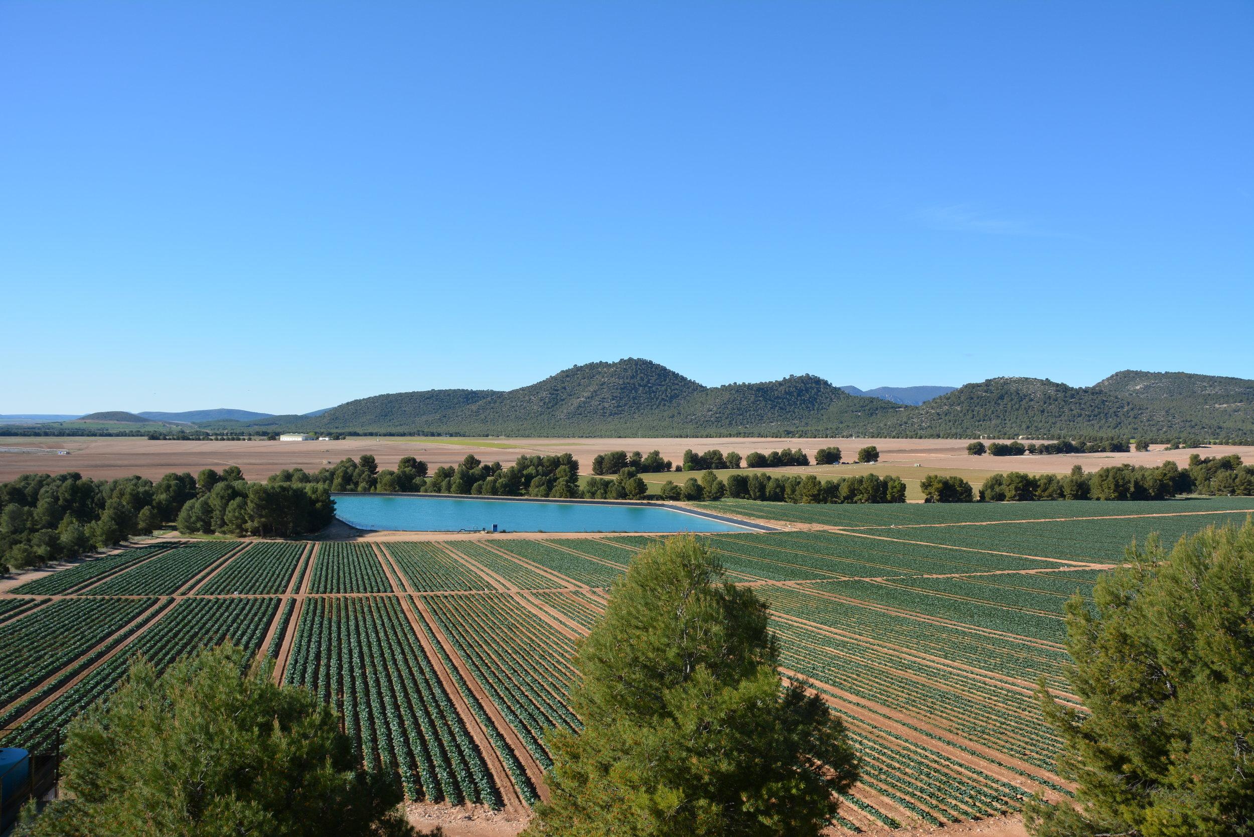 Vista panorámica de los terrenos del futuro proyecto Ambera.