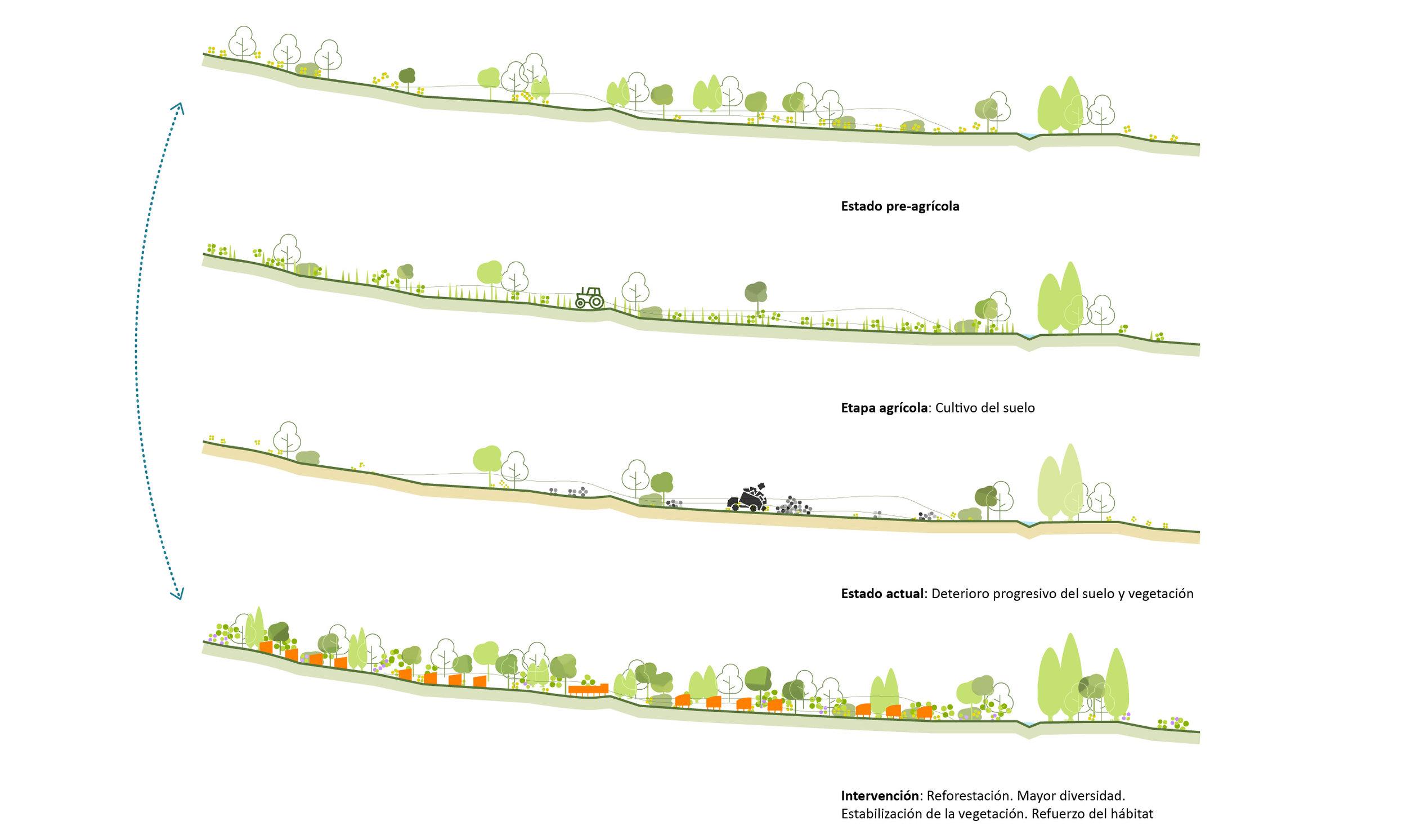 04_reforestación solana.jpg