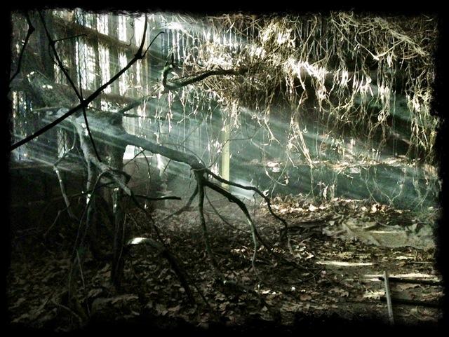 Jonathon Strange & Mr Norrell - tree in ballroom David Roger production design 3.jpg