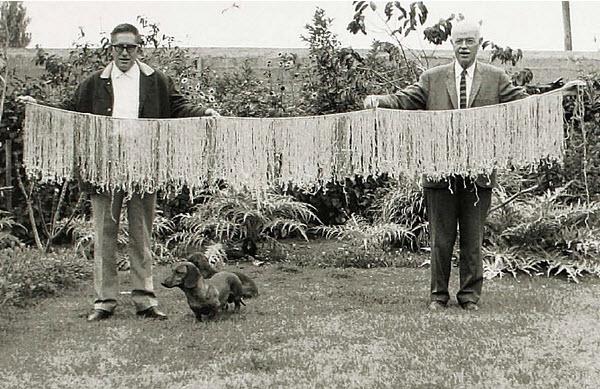 Longest known quipu.jpg