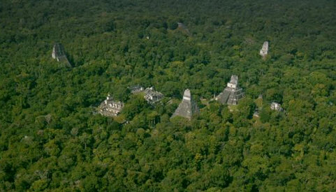 Tikal with jungle over growth