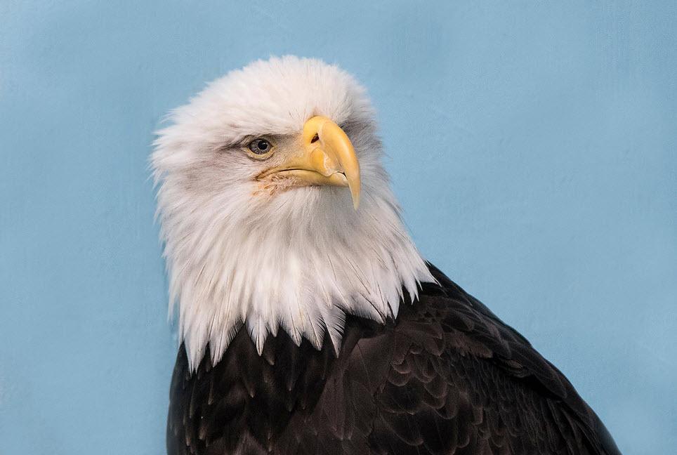 HP eagle.jpg