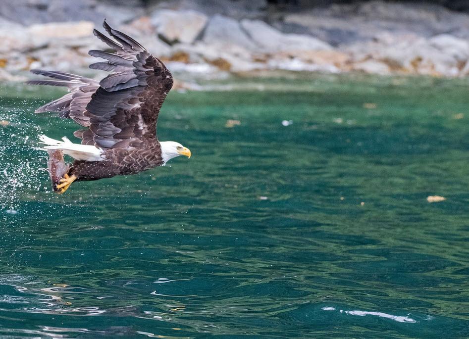 HP Flying eagle.jpg
