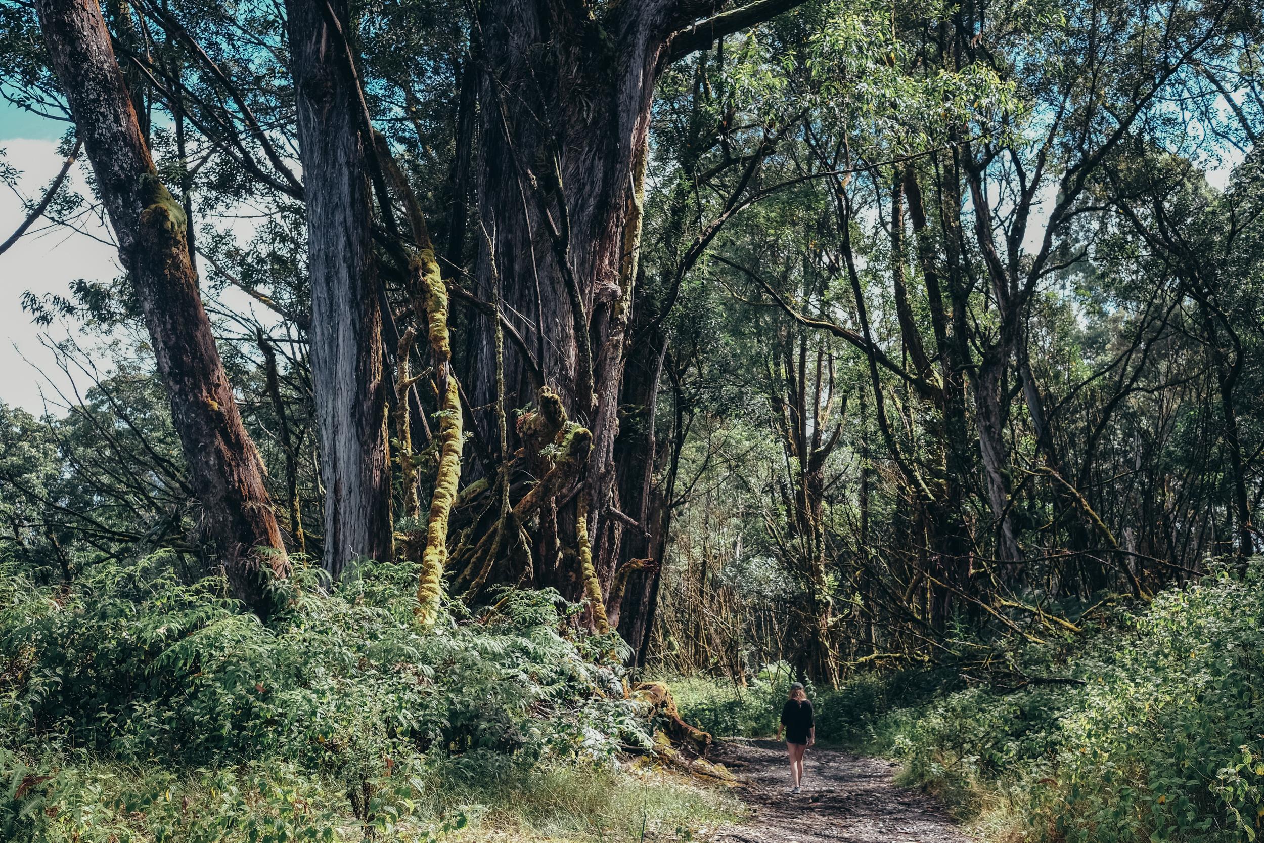 Maui045.jpg