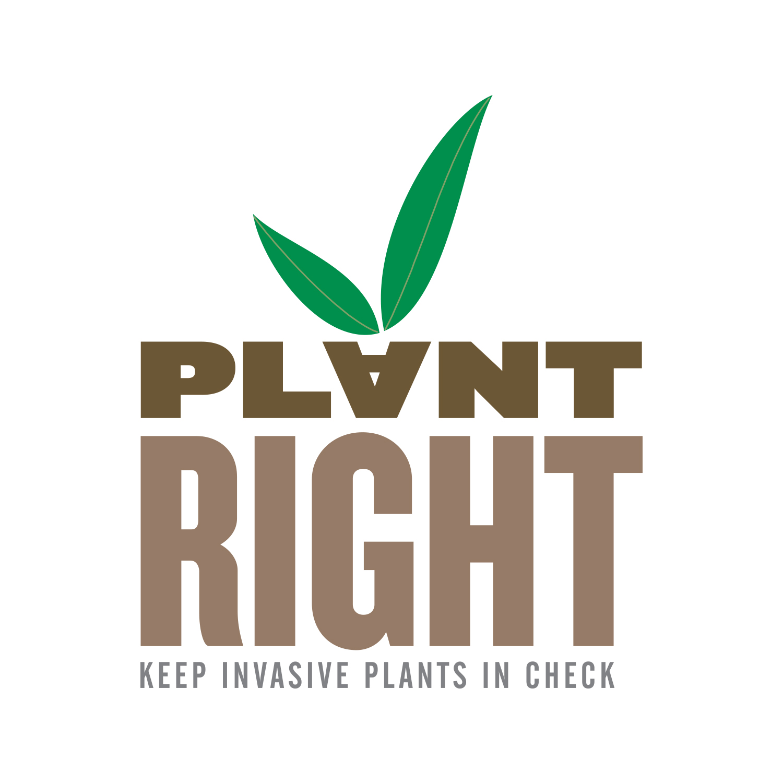 Plant_right_california.jpg