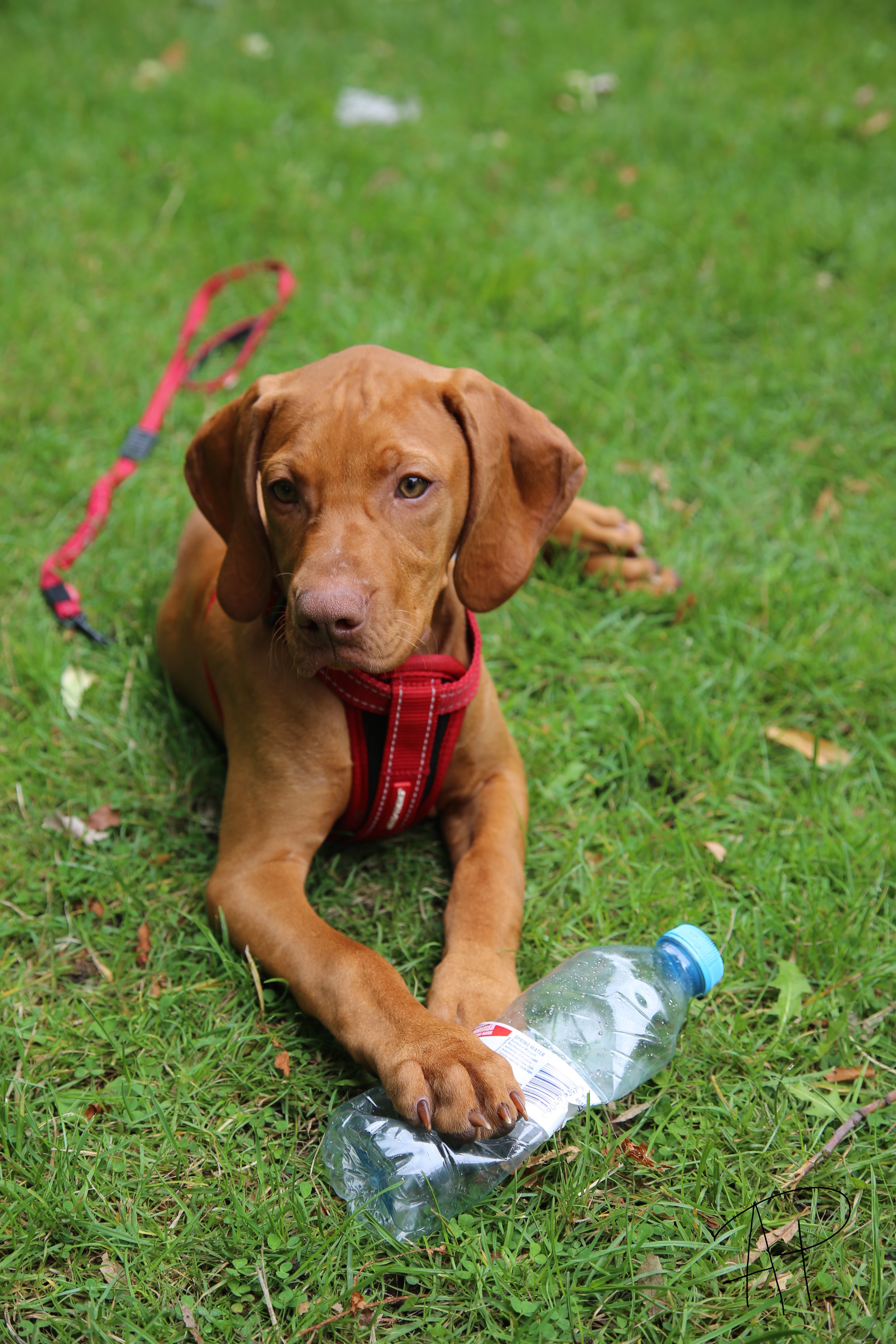 Summer Time - Tips on how to keep your pet cool this summer