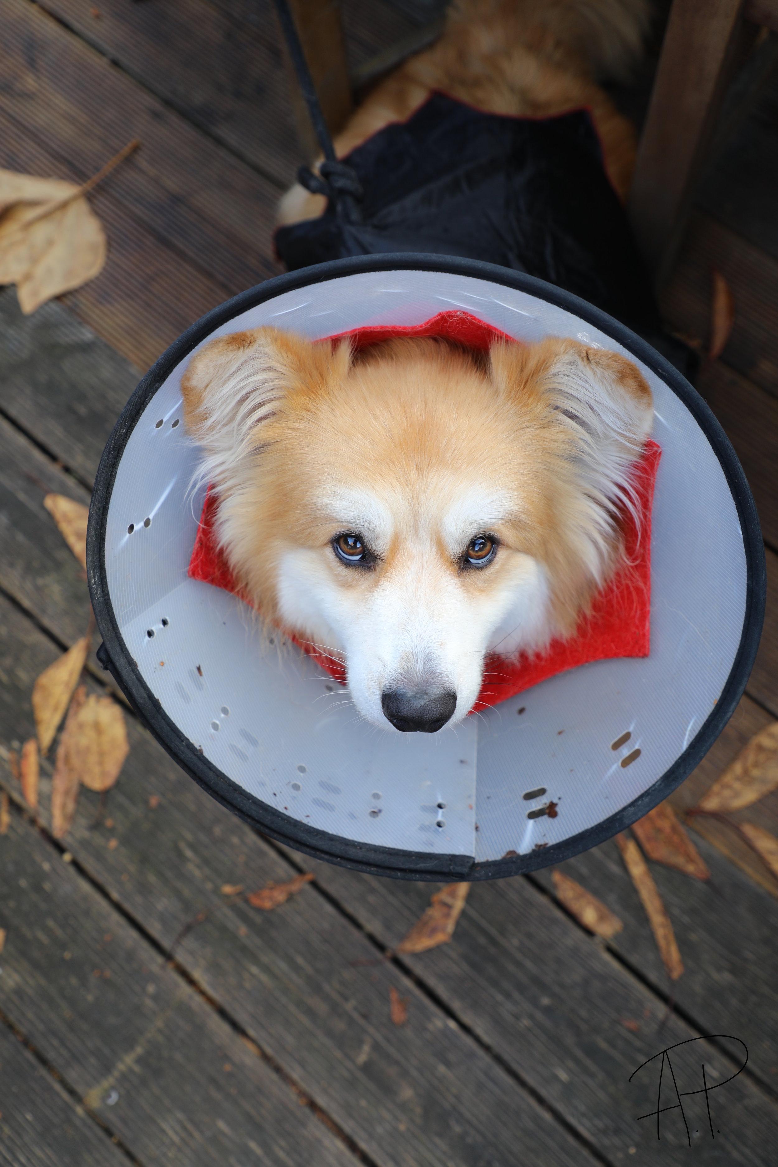 All Dogs Matter Halloween Walk