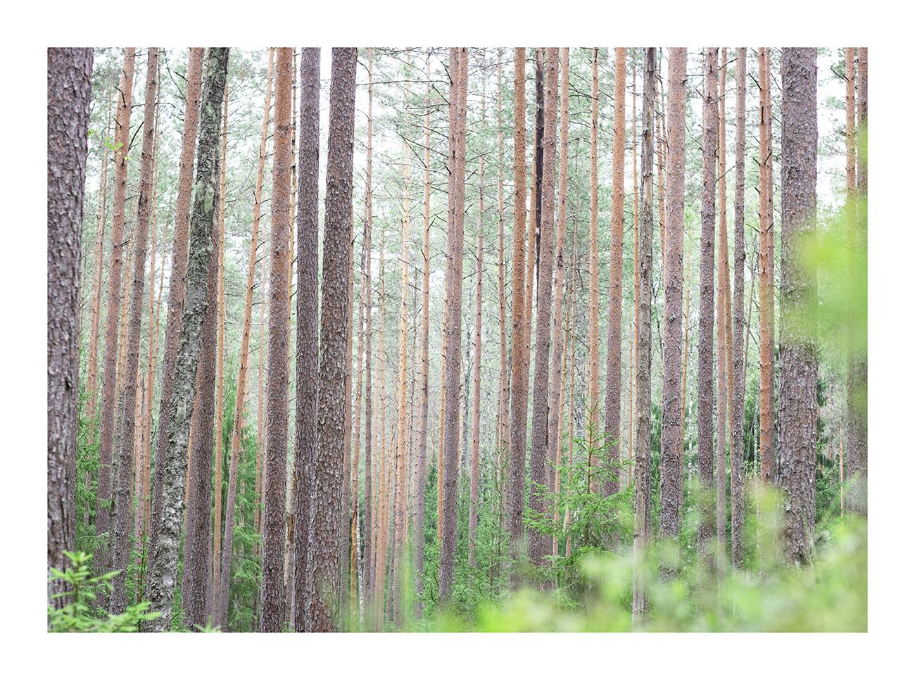 Kõltsi-mets