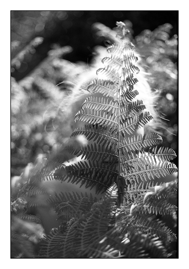 helen_västrik_camouflage3.jpg