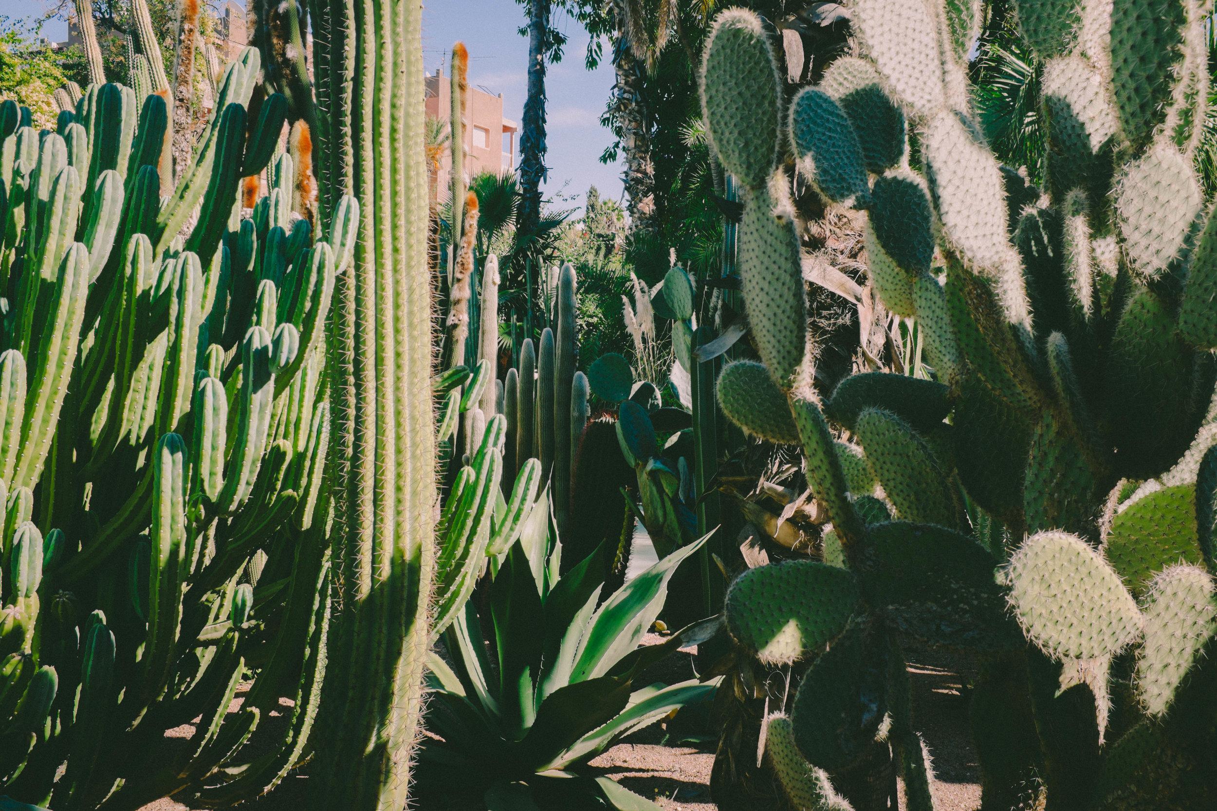 Morocco_Helen_Västrik_Jardin_Majarell_-5.jpg