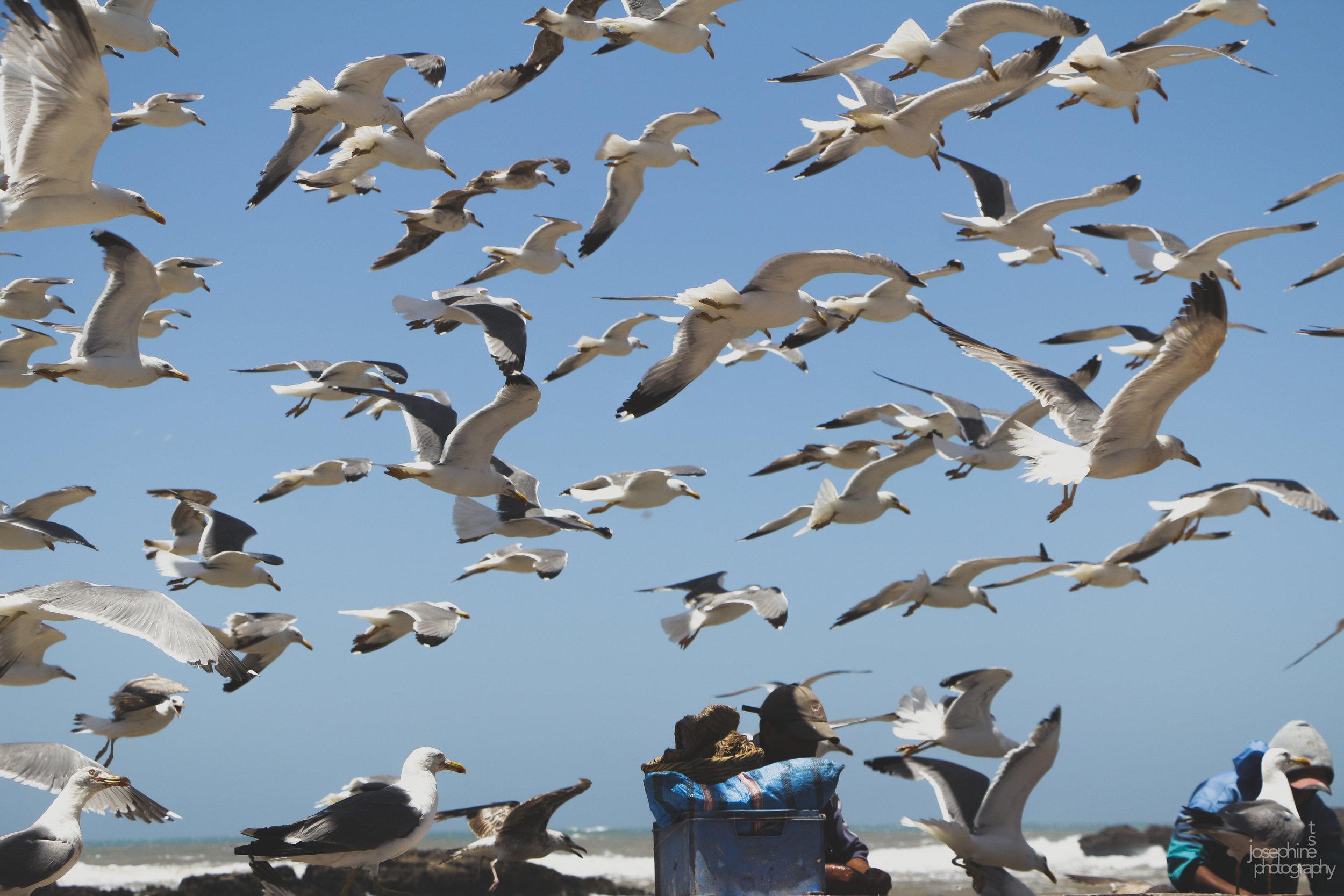 Flocking for Food  Essaouira, Morocco, 06/17