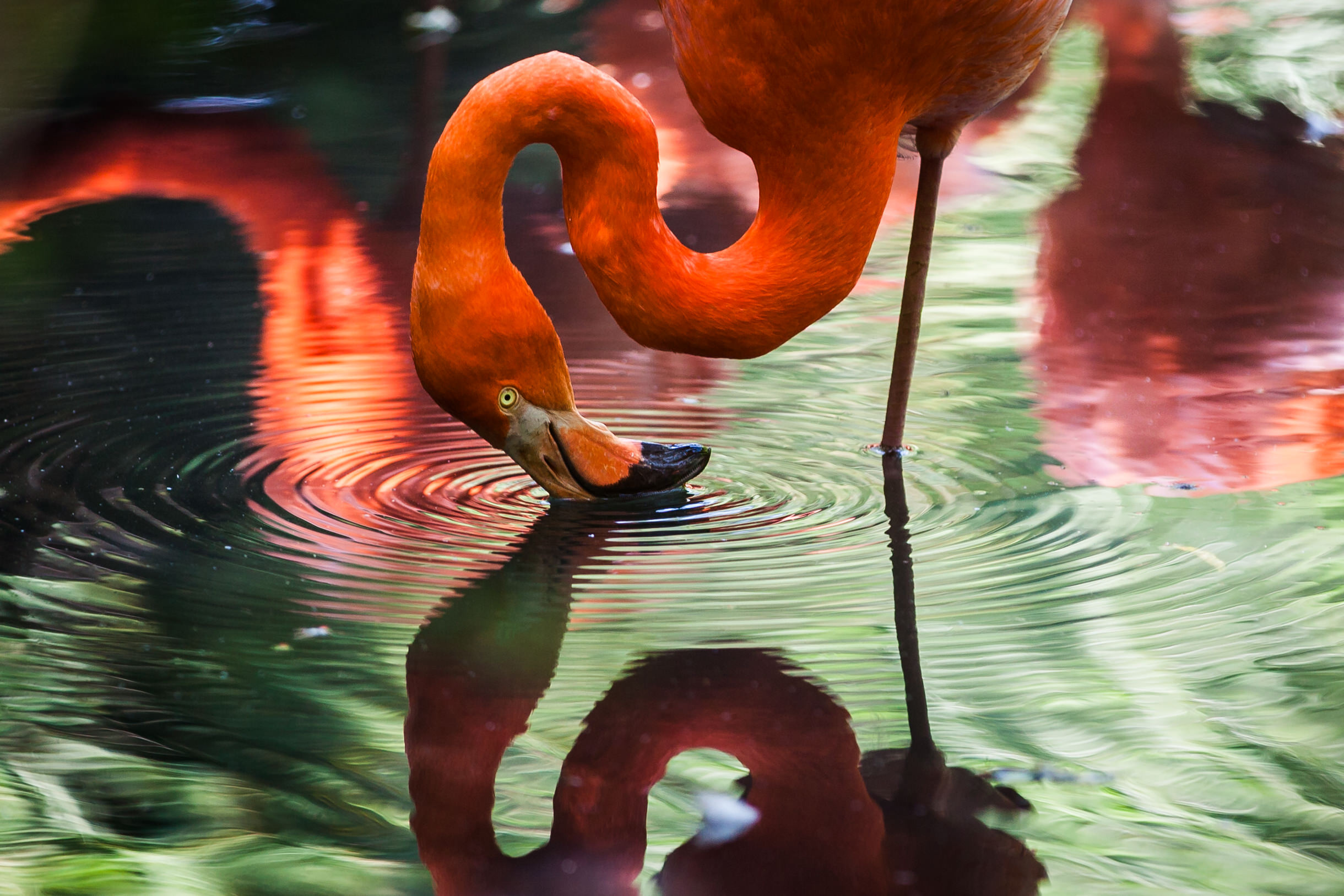Rio Reflections... (Image credit: Unsplash)