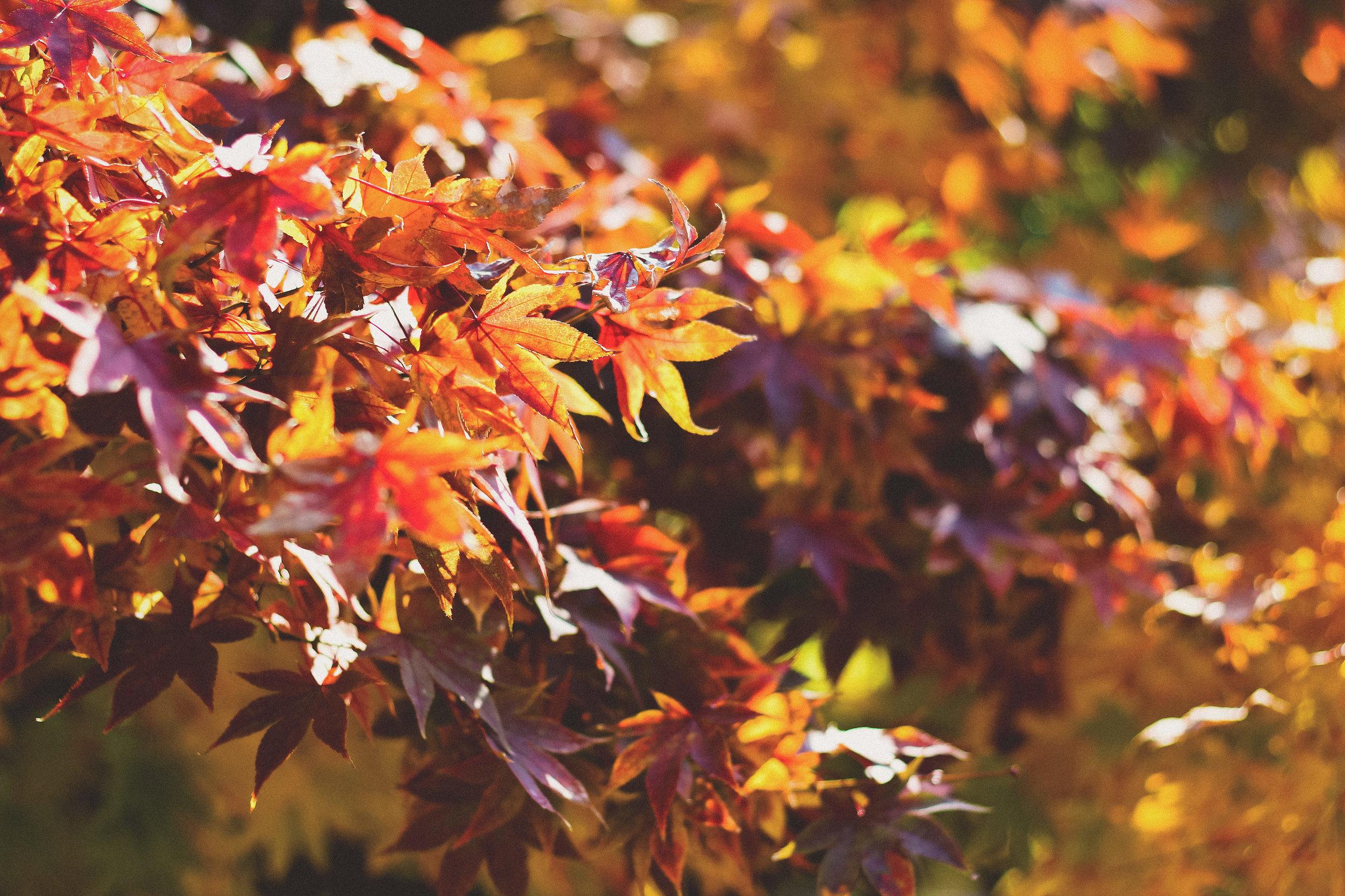Season of mists, mellow fruitfulness and school open days. Image credit: Unsplash