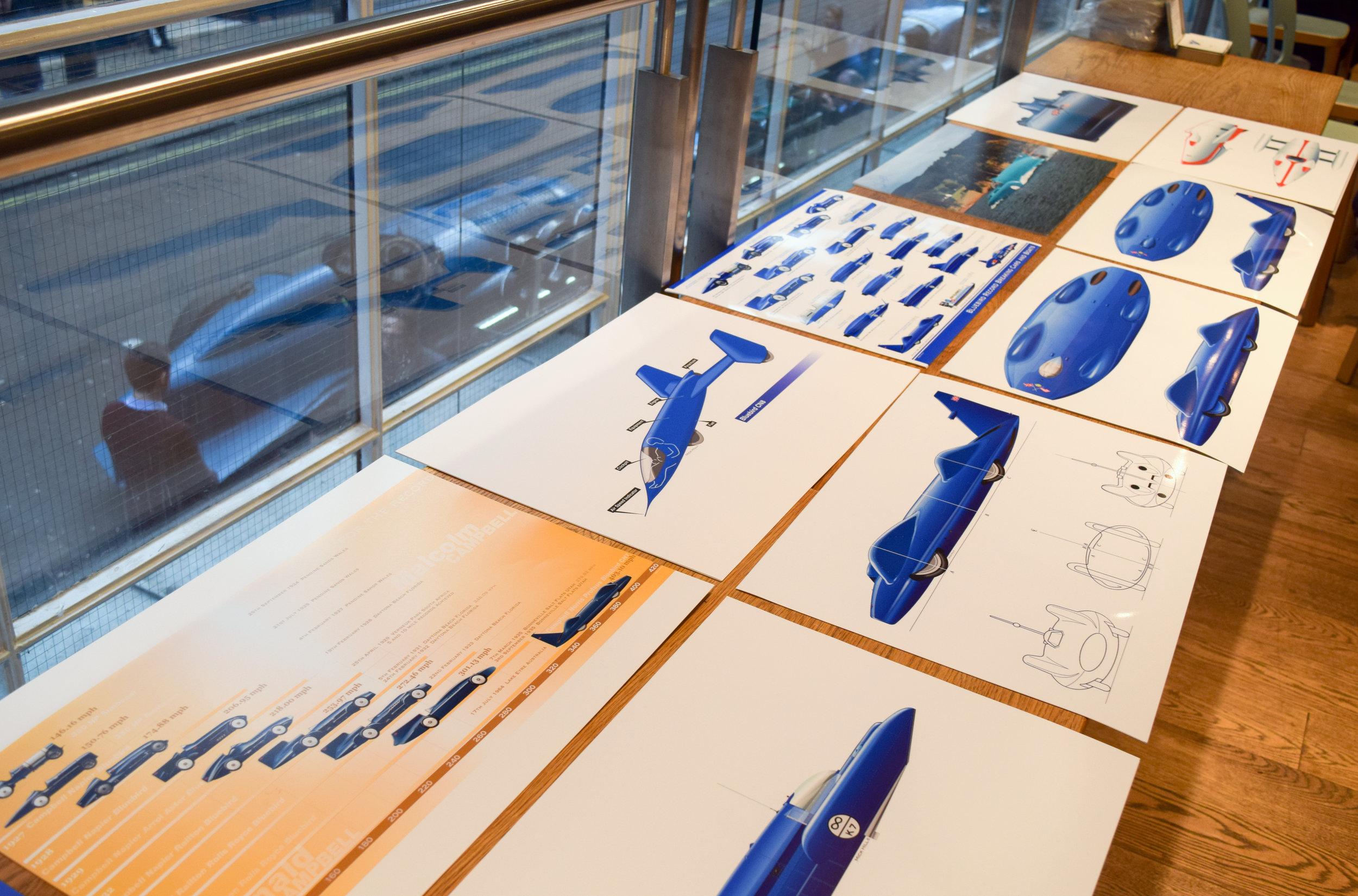 Bluebird Art Prints