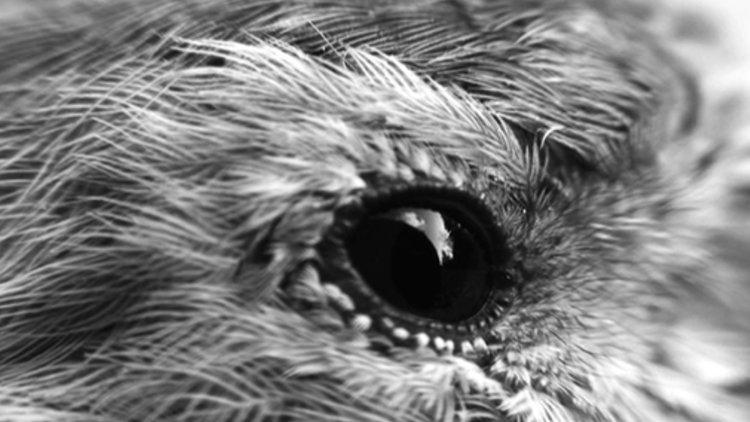 Sam+Spreckley+image+4+black+and+white.jpg