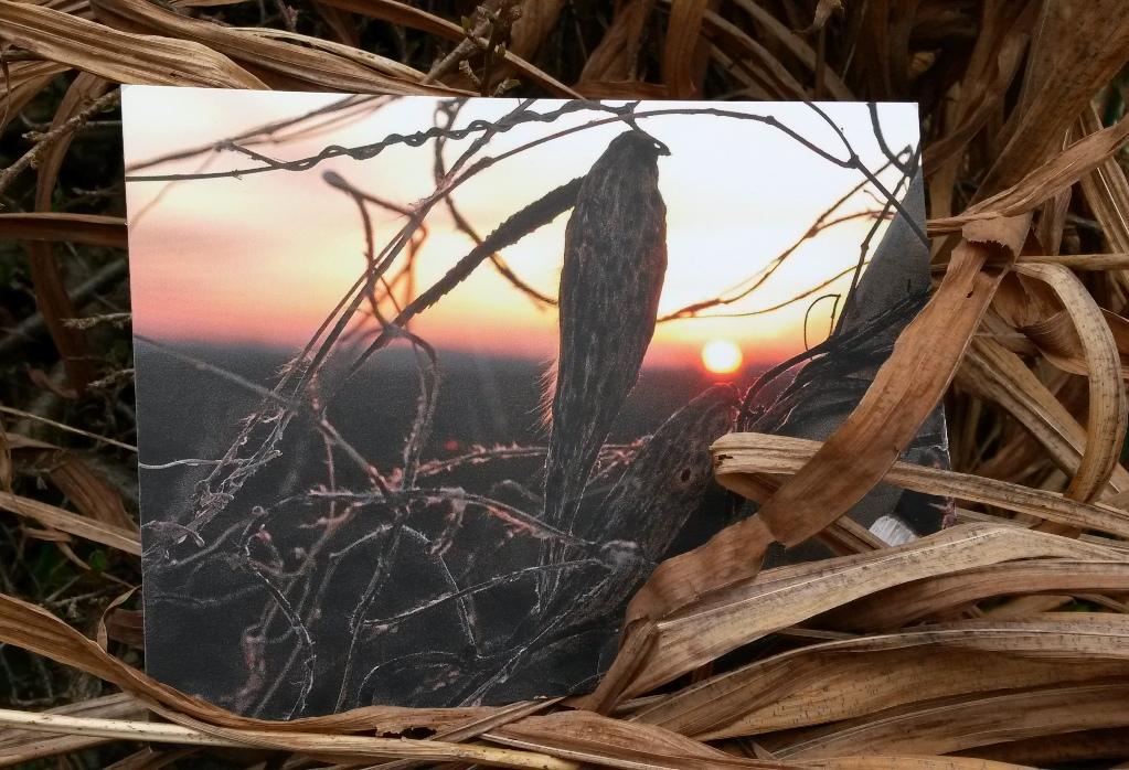 Weeds & Sunset