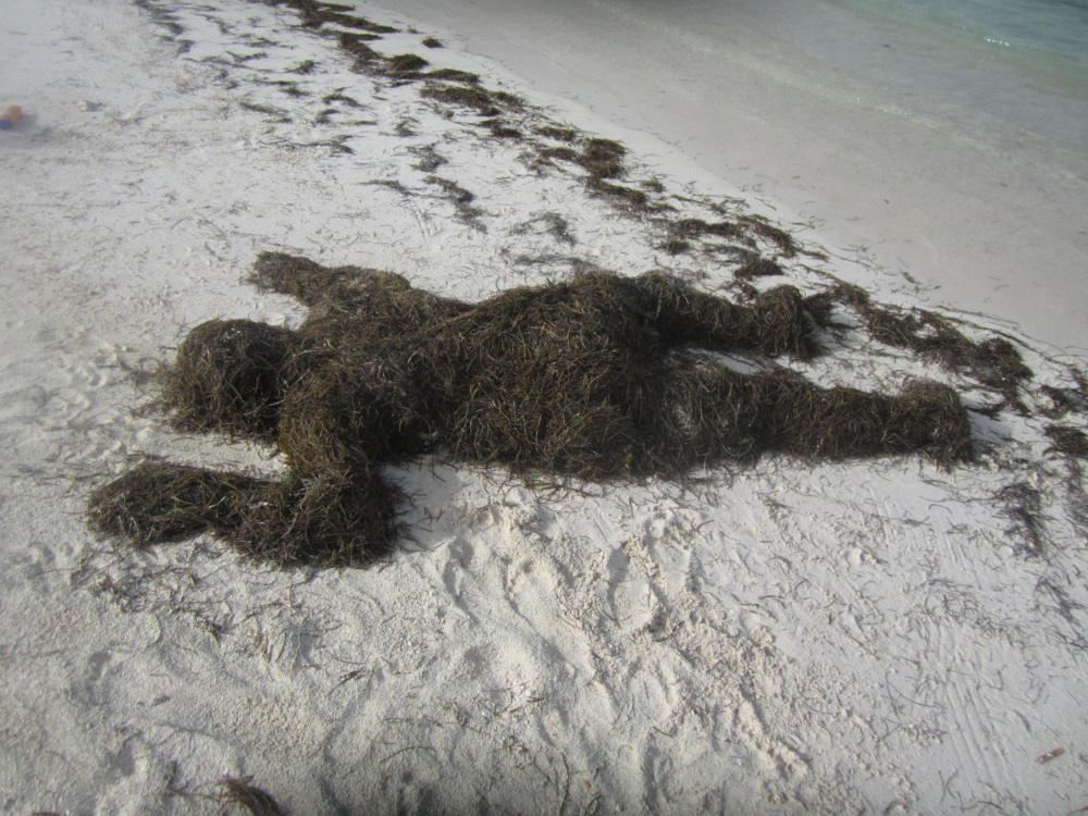 Study for  Watergrass , 2014, performance  This performance, in which the artist emerges from a mantle of seaweed on the shores of a Dominican beach, is documented in a series of photographs. Davis further explores the motif of the crawling, overlaid figure in the video work  Watergrass.