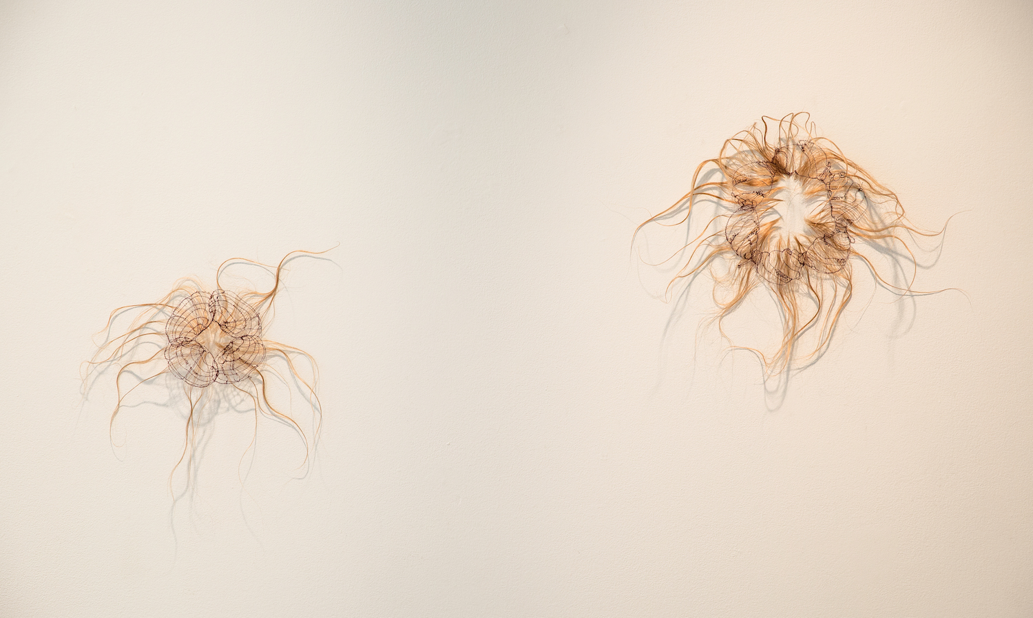 Left:  Patriarchal Orifice #3: Brook Floater (Alasmidonta varicosa) , Thread stitched on human hair, insect pin, styling products, 14 x 14 inches, 2017. Right:  Patriarchal Orifice #1: Vertigo Morsei , Thread stitched on human hair, insect pin, styling products, 16 x 19 x 1 inches, 2016