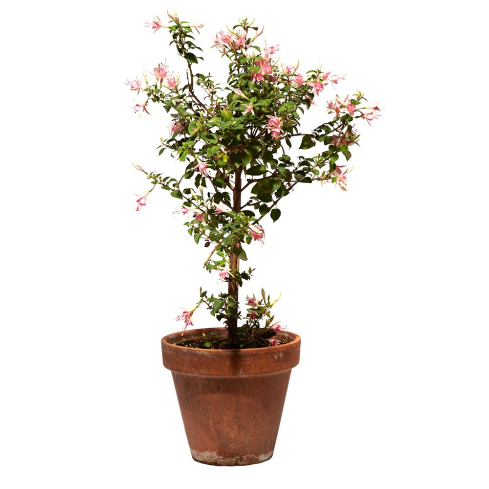 Fuchsia Pink Galore