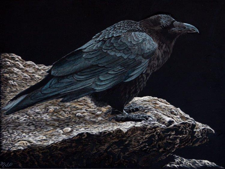 Artist Margaret Pardy's scratchboard titled The Raven .