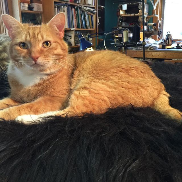 The new website is mere hours from being launched! We have a new domain name (which will be revealed at the moment of launch), new emails, new blog/newsletters/and so on... the 21st century is here and we have risen to the challenge... in the meantime, here is a picture of Liam the Cat... #PotomacLeatherCo