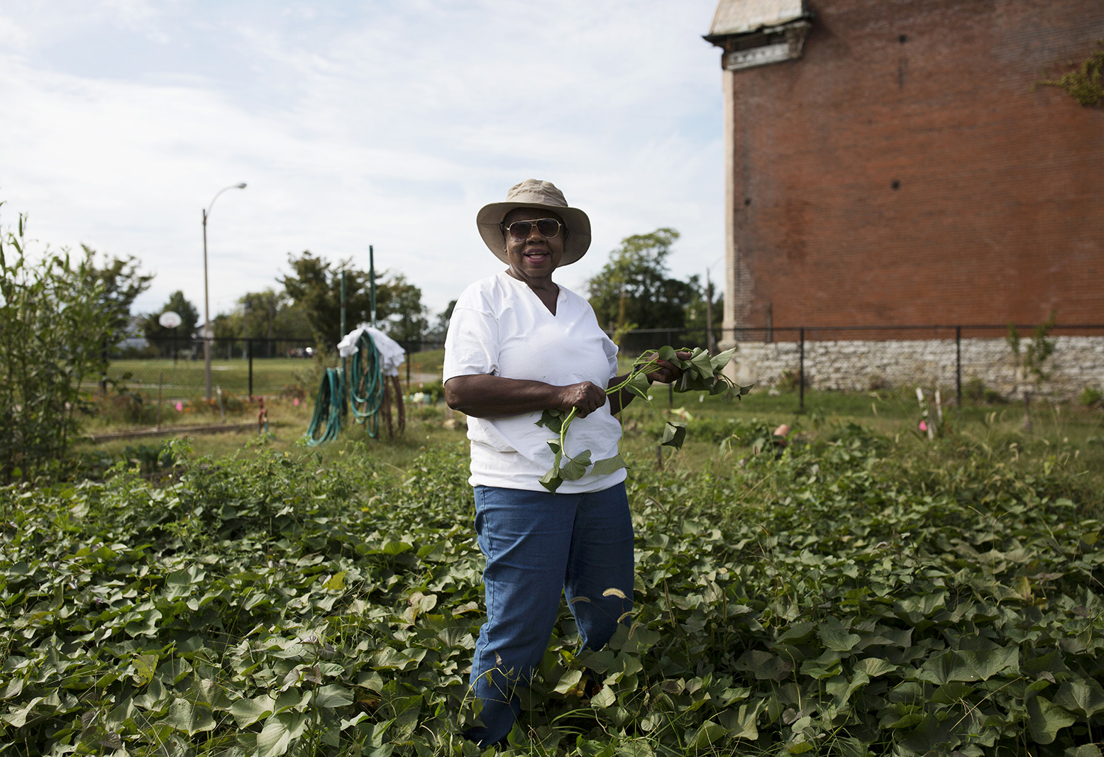 Rosie WIllis harvests sweet potatoes that she give away to volunteers at Fresh Starts Community garden in north St. Louis. Seven years ago, Willis says the now lush garden was full of garbage and drug paraphernalia.   CAROLINA HIDALGO | ST. LOUIS PUBLIC RADIO