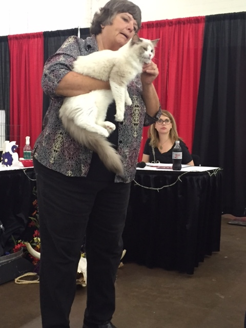 Ragissa Pireus achieved the Champion status at the Dallas Pet Expo Show.  It was his second show and first one as an adult cat.  We are so proud of him!!