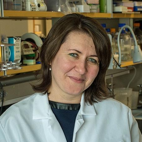 Ganna Bilousova, PhD