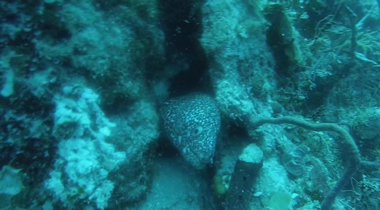 More Eels