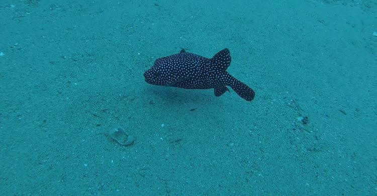 Our Fishy Friend